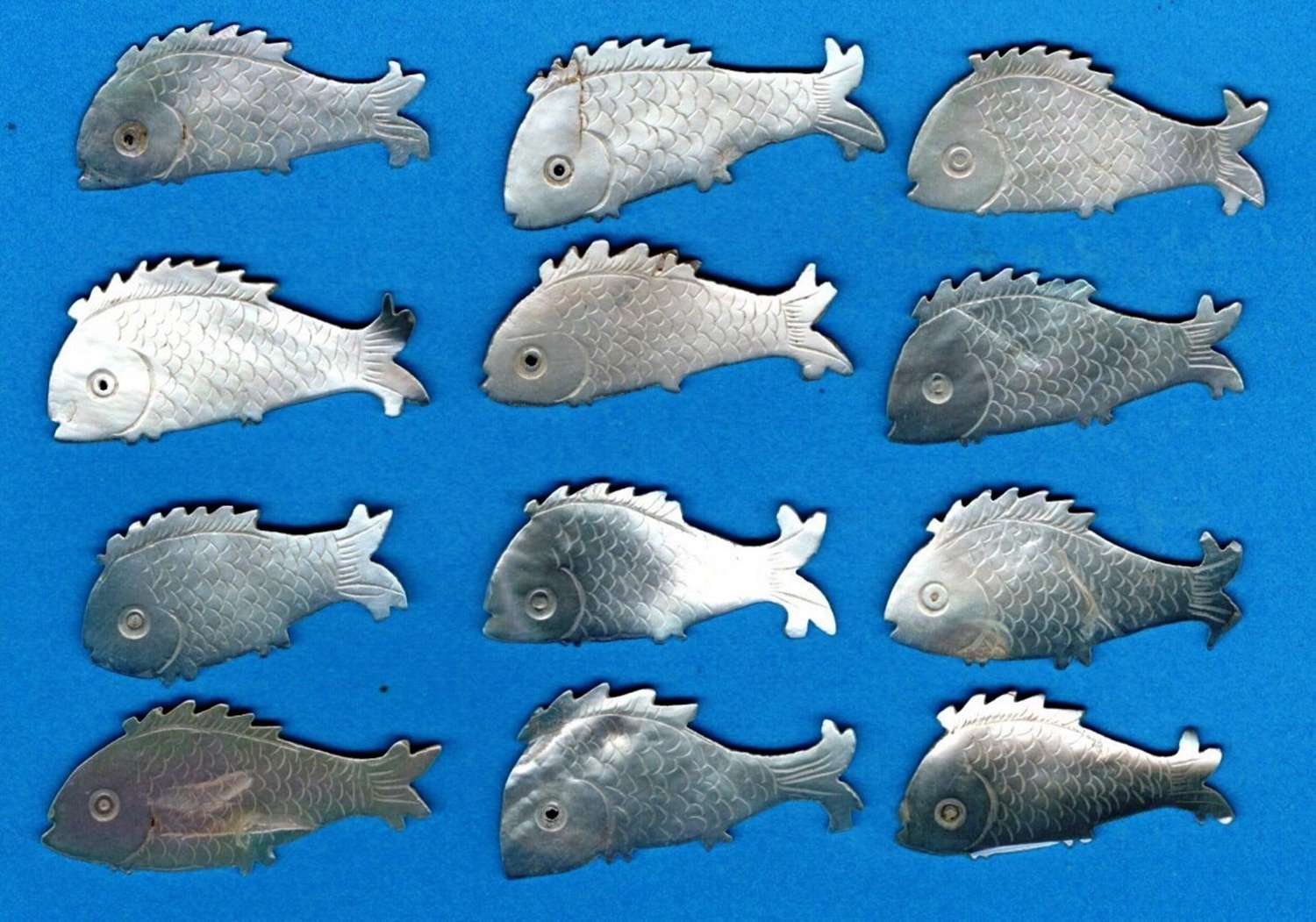 Twelve rare small fishes